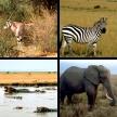 Afrikas Tiere: Wilde Schönheit
