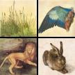 Dürers Studien der Natur