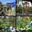 Jardin Majorelle (Majorelle Gardens)