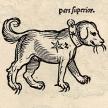 Kleiner Hund (Canis Minor)