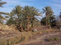 Al-Qasr,OttomanVillage_2007jan15_nearDakhlaOasisEgypt40_byDanielCsorfoly