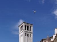 Assisi San Francesco BW 4