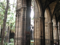 Barcelona catedral cloister pillars