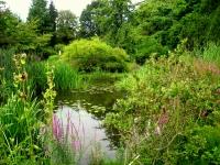 Botanischer_Garten_der_TU_Darmstadt_-_IMG_7047
