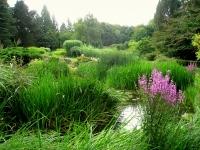 Botanischer_Garten_der_TU_Darmstadt_-_IMG_7048