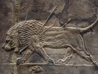 Britishmuseumassyrianlionhuntreliefdyinglion