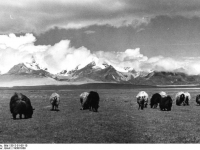 Bundesarchiv_Bild_135-S-01-05-10,_Tibetexpedition,_Landschaftsaufnahme,_Viehherde