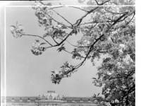 Bundesarchiv_Bild_170-620A,_Potsdam,_Sanssouci,_Schloß