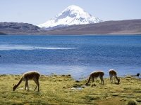 Chungara-See und Vulkan Sajama, Sicht aus Chile.