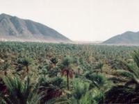 Figig_marokko
