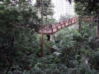 HK EdwardYoudeAviary Bridge