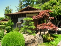 Japanese_Tea_Garden,_San_Mateo,_CA_-_IMG_9095