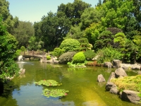 Japanese_Tea_Garden,_San_Mateo,_CA_-_IMG_9118