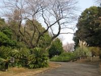 Koishikawa Botanical Gardens, Tokyo - entryway