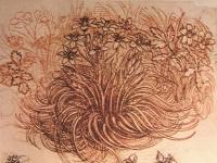 Leonardo_botanical_study