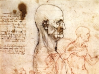 Leonardo_da_vinci,_Profile_of_a_man_and_study_of_two_riders