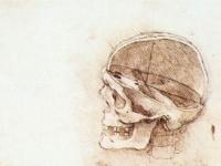 Leonardo_da_vinci,_Studies_of_human_skull