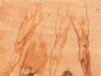 Leonardo_da_vinci,_Studies_of_legs_of_man_and_the_leg_of_a_horse