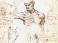 Leonardo_da_vinci,_studi_anatomici_1509-1510