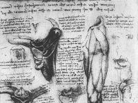 Leonardo_da_vinci,_studi_anatomici_1510