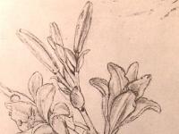Leonardo_lilies