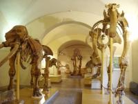 Museo_di_Storia_Naturale_di_Firenze_-_paleontology