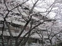 NDL_Tokyo_with_sakura_20080328