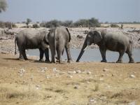 Okakuejo, Etosha-Nationalpark, Namibia