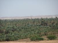 Palminsudan