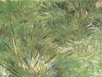 Vincent_van_Gogh_-_Clumps_of_Grass