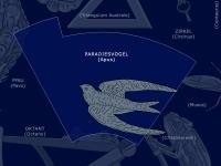 Paradiesvogel: Apus