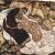 Egon Schiele: Der Tod und die Frau