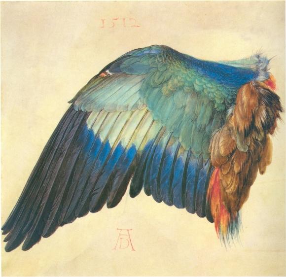 Albrecht Dürer: Flügel einer Blaurake (1512)