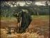 Vincent_van_Gogh_-_Boerin_aardappelen_opgravend