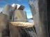 Guggenheim Museum, Bilbao (8)