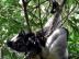 Indr Indri
