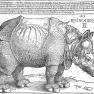 Albrecht Dürer: Rhinocerus, Holzschnitt von 1515