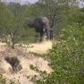 Elefant Etosha-Nationalpark, Namibia
