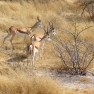 Etosha-Natinalpark, Namibia
