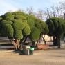 Monument_to_Jacinto_Benavente,_Parque_del_Buen_Retiro,_Madrid_-_trees
