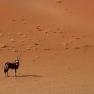 Oryx-Antilope in der Sossusvlei, Namibia