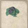 albrecht duerer Violette-bouquet-durer