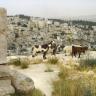 Amman, Blick von der Zitadelle
